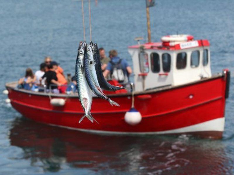 mackerel-44-main