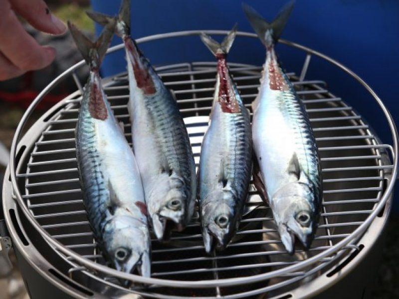 mackerel-45-main