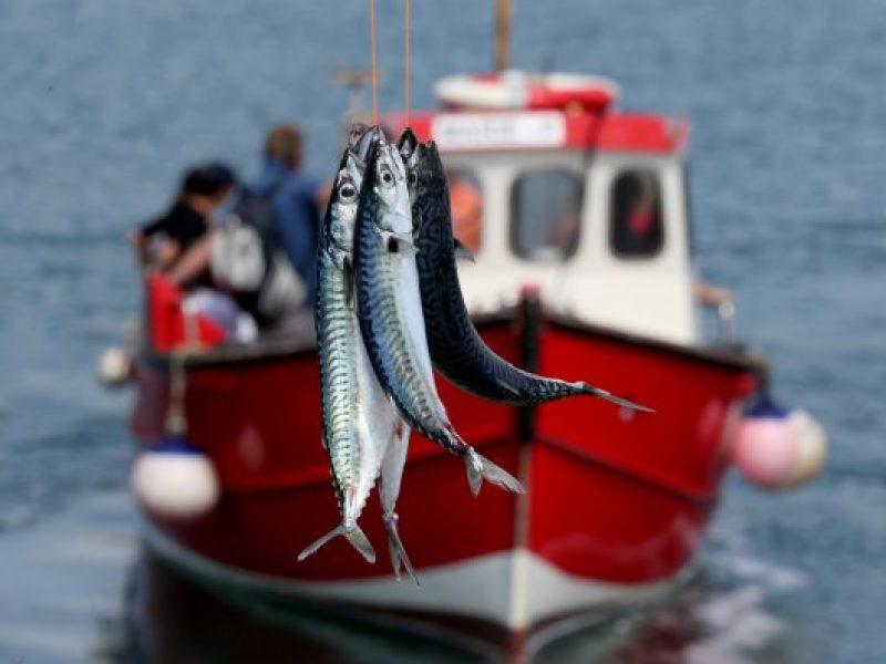 mackerel-43-main